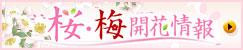 桜・梅開花情報