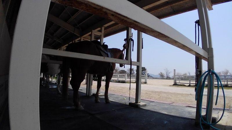 牧場を通り抜ける風が心地いい! 馬に乗ってみる^^
