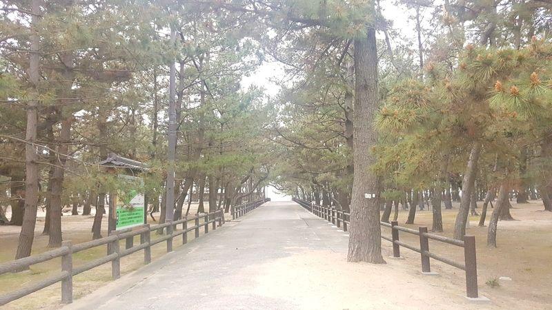 淡路島夕日の名所で散歩いかがでしょうか