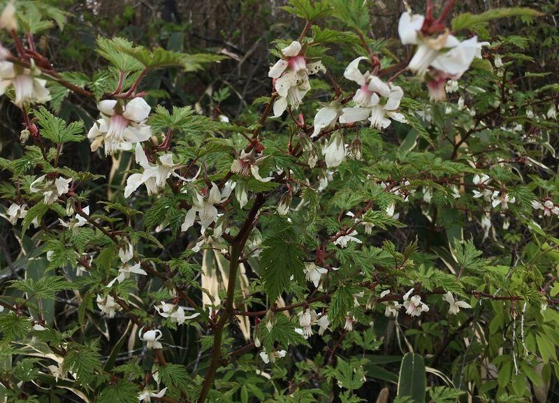 茶臼山に花がたくさん咲いてきました。