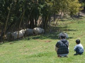 ヤギの赤ちゃんも産まれた「なかよしとんがり牧場」