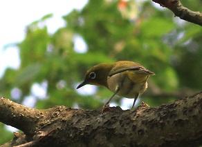 諏訪の池の野鳥たち