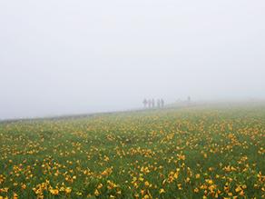 花好き必見 天空のお花畑 ニッコウキスゲの咲く雄国沼へ