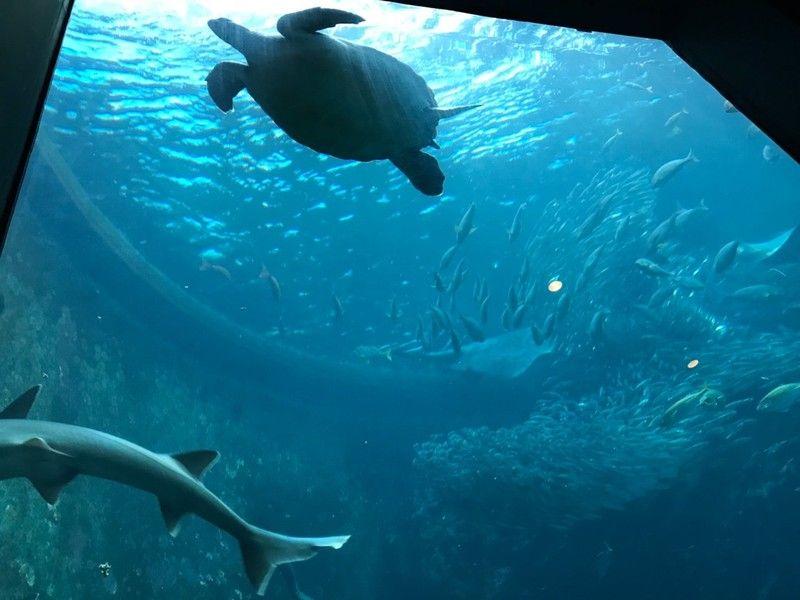 夏休みはここに決まり!海中水族館で海の世界を体験しよう✨