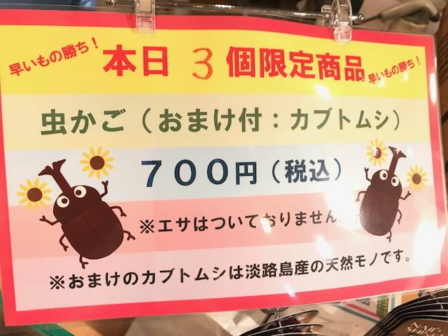 人気のカブトムシ付き虫カゴ8月31日まで!