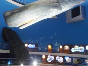 ここにクジラがいたの?ウソ?ホント?