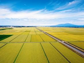 稲刈りシーズン到来!