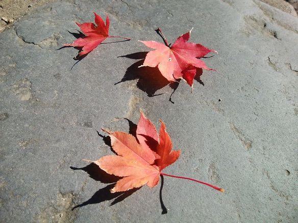 秋の赤いシリーズ【其の五】