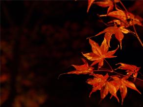日本三景!秋の松島に行ってきました♪