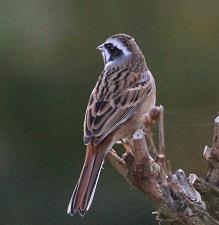 諏訪の池の野鳥たち(11月30日)