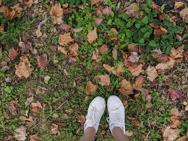 秋の終わりに...