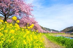 南伊豆の春はもうすぐです!!