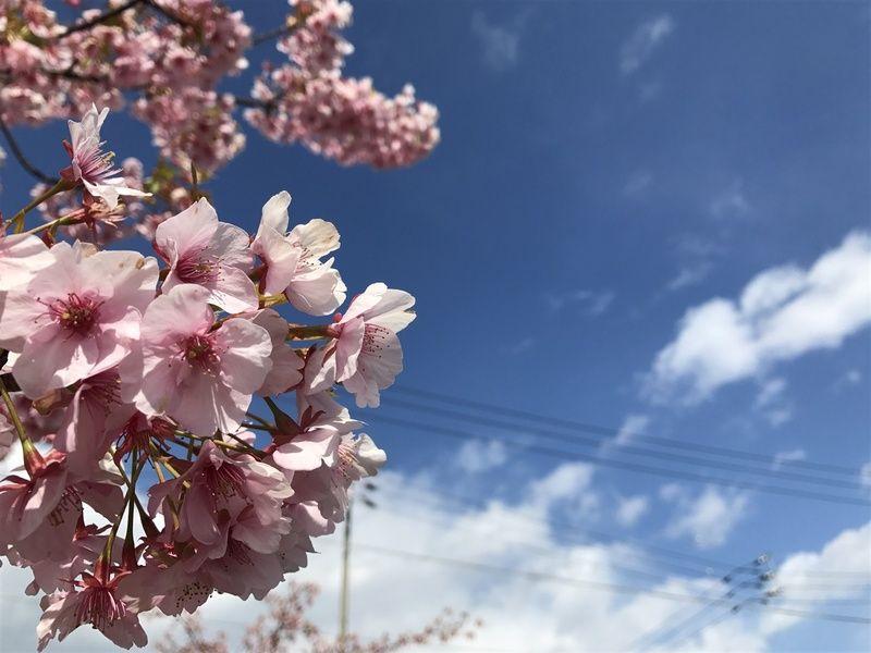 春を求めて・・・花よりうどん!