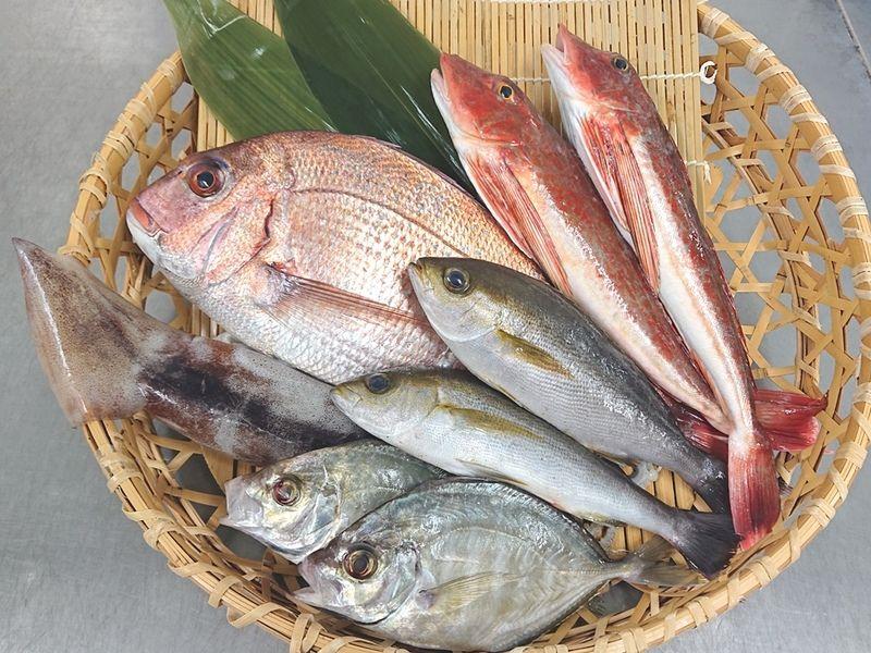 新鮮な南房総産鮮魚をご自宅にお届け