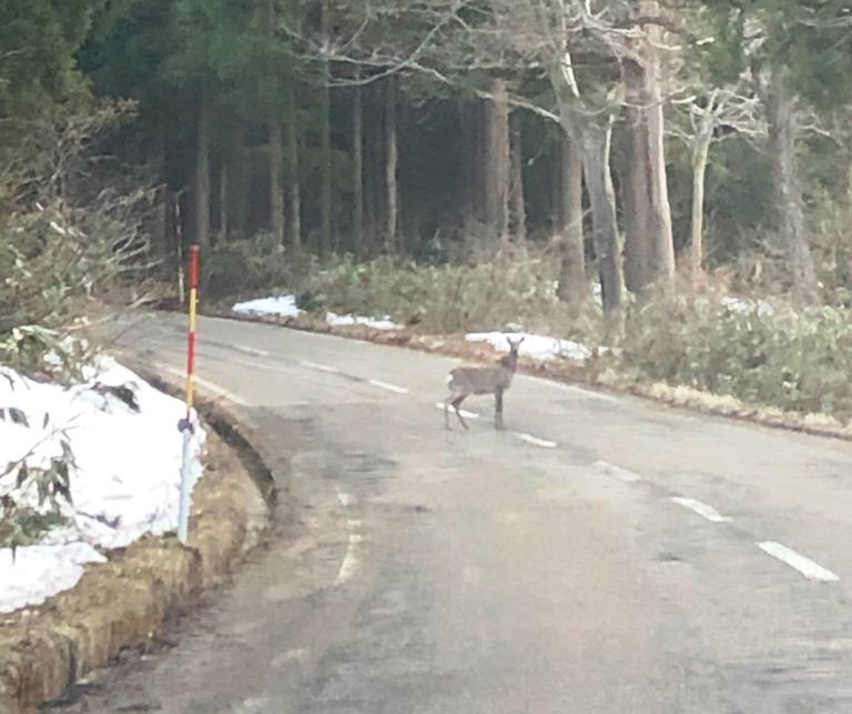 久し振りに鹿を目撃!