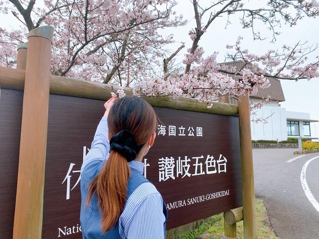 桜と一緒に、私たちがお待ちしております♪