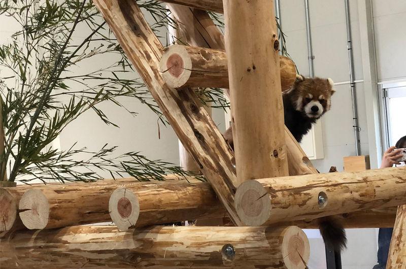 豊橋動物園『のんほいパーク』