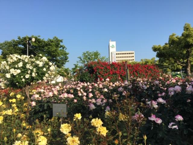 周辺の花便り  (その3)