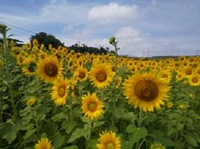 休暇村周辺の花