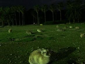 夕暮れからの大久野島