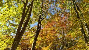 秋深まる乳頭温泉郷