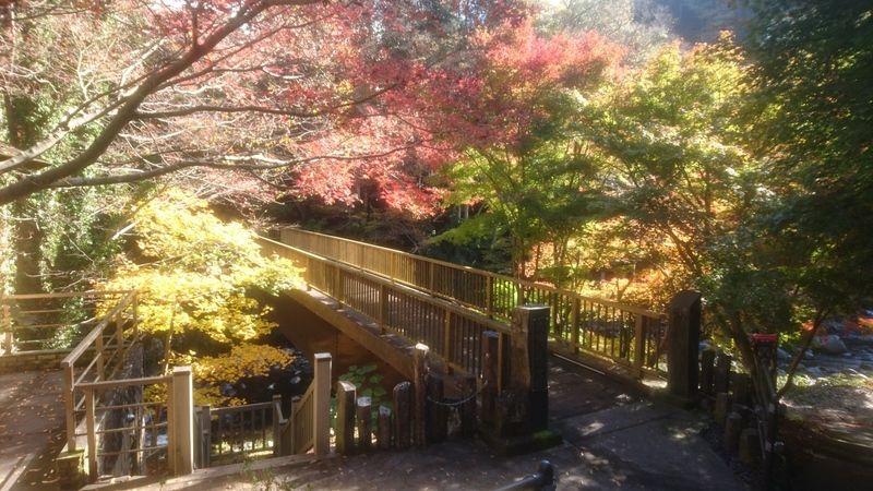 天城湯ヶ島温泉郷の紅葉