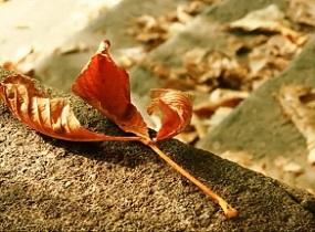 秋の季節もそろそろ