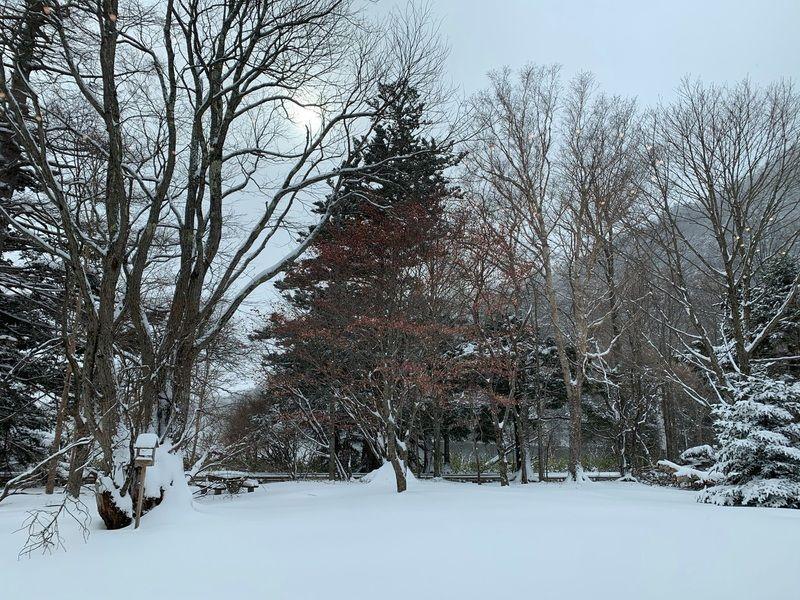 「冬の奥日光で湯巡り」中止のお知らせ