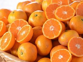 柑橘王国えひめのビュッフェ
