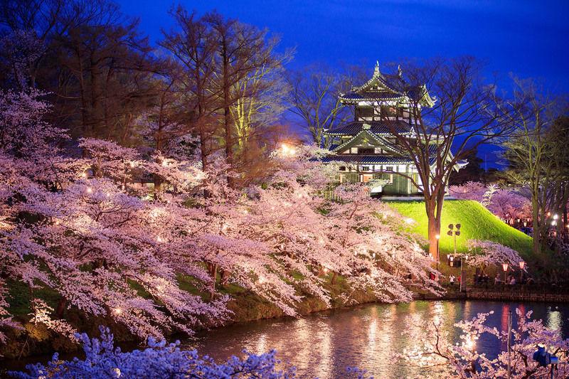 高田観桜会いよいよ始まりました