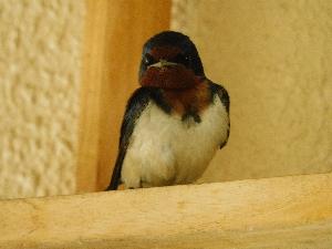 【野鳥】春のご宿泊客