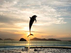 ✨GW限定 夜の四国水族館✨