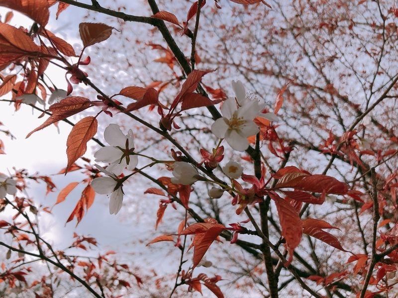 茶臼山にも春が来た!