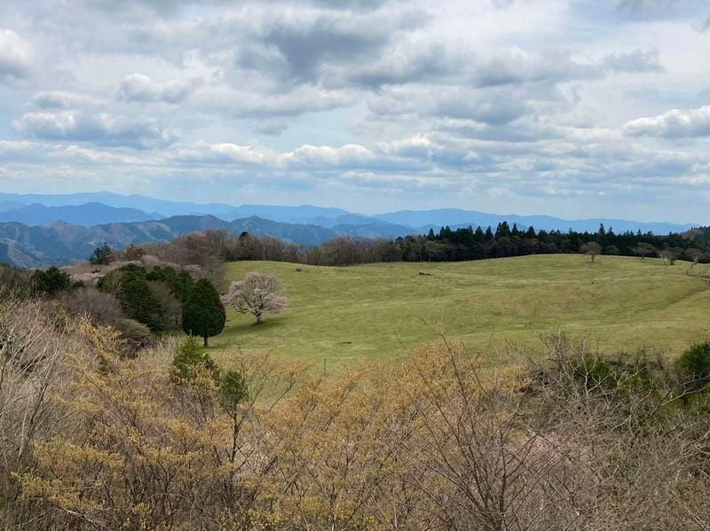 2021茶臼山の一本桜、芝桜の開花状況