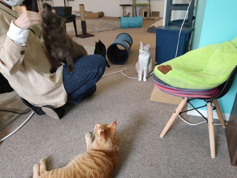 【猫】かわいい保護猫たち【カフェ】