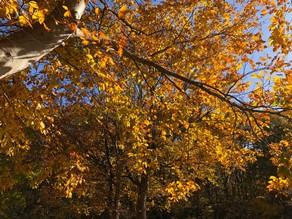 秋キャンプのすすめ~爽秋の風を感じよう~