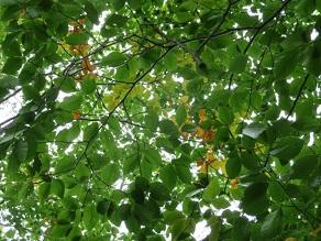少しずつ紅葉が近づいてきました。