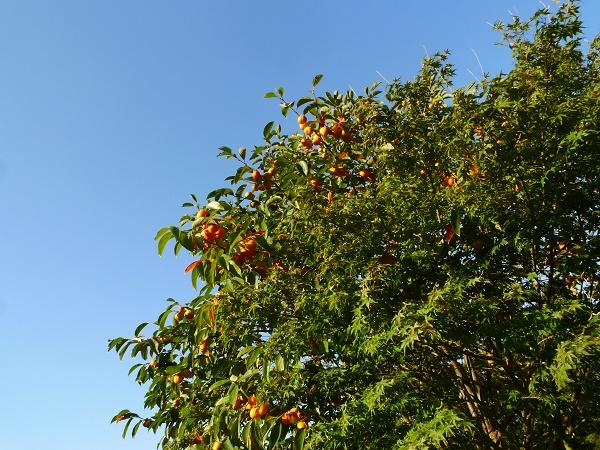 この木なんの木 木の日です