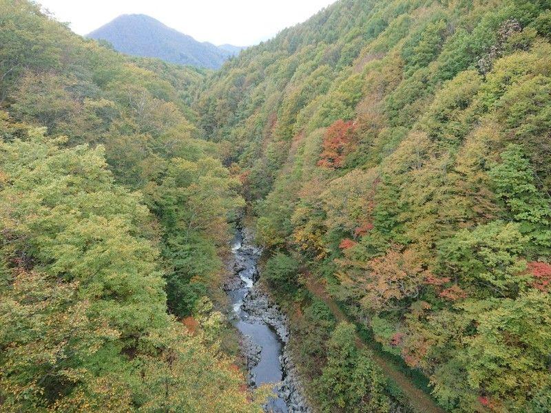 色づき始めた「中津川渓谷」へ行ってみよ!