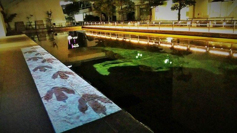 福井駅周辺夜の観光