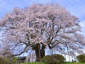 リゾートホテルから行く!桜の名所7選 いずれくる春を願って