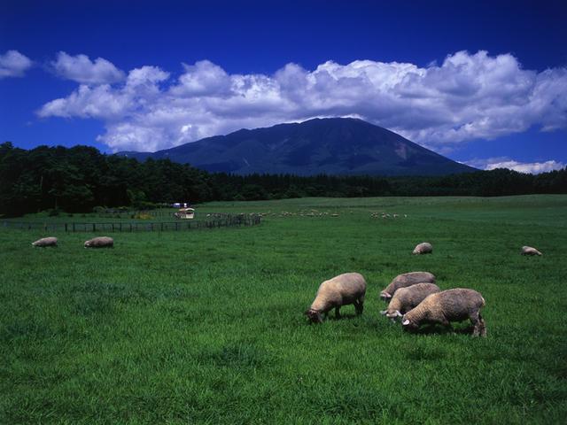 [【夏割♪1泊2食料金お子様半額です】~ファミリーに大人気「小岩井農場」で思い出づくり♪~お子様連れ応援バイキングプラン] あの小岩井牛乳はここの名産。日本一の民間農場【小岩井農場まきば園】ご家族そろって楽しもう!