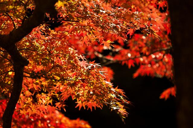 [秋【5泊10食】 庄内めぐりと温泉を楽しもう!温泉のんびり連泊プラン] 秋深まり鮮やかな光景