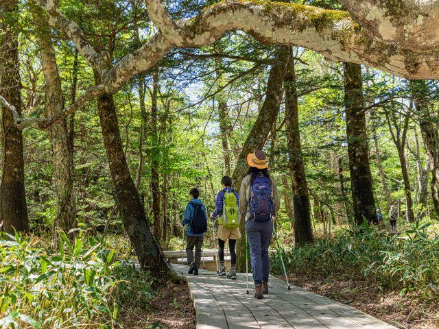 [【5泊がお得】1泊あたり2,000円割引!7・8月のお得な5泊10食プラン] 滞在中のおすすめスポット~湯滝~気軽に歩ける木道の散策路もあり森林浴におすすめ