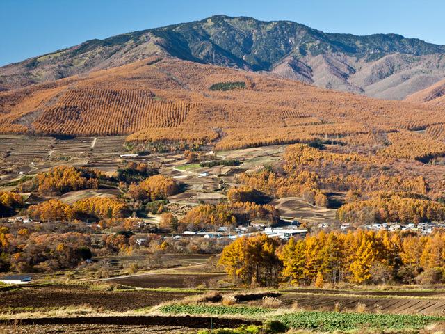 [【連泊するとお得】天然温泉を楽しむ鹿沢の休日2019年10月~【3泊】公共交通機関ご利用のお客様へはJR上田駅からの送迎便もあります!] 日本百名山にも選ばれている四阿山(あずまやさん)の黄葉は山肌は黄金色に染めます。