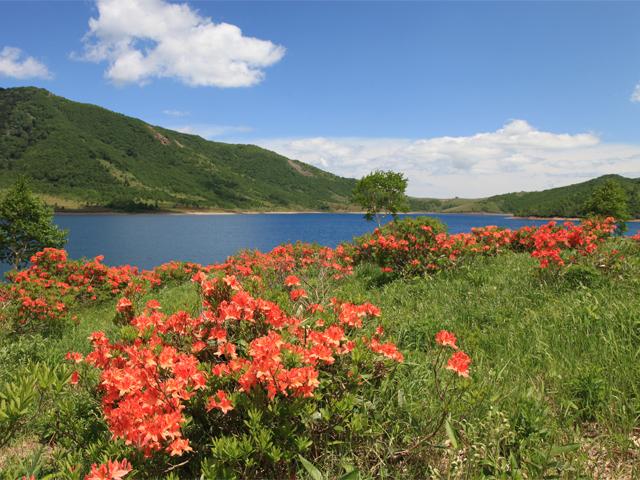 [【旅Q】~天空の湖を歩こう~夏の野反湖お花見トレッキングガイドツアー] 夏の野反湖~レンゲツツジ~