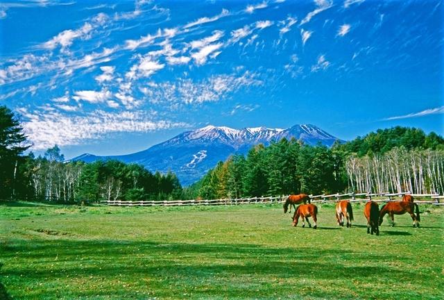 [【観光ツアープラン:旅Q】信州の魅力再発見♪上高地と木曽イイトコ巡り] 木曽馬の里より雄大な風景を愛でる