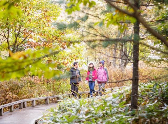 [【特撰会席と信州バイキングを楽しむ♪】 秋の温泉連泊割引プランプレミアム] 乗鞍・上高地の秋はトレッキングスポットがいっぱい