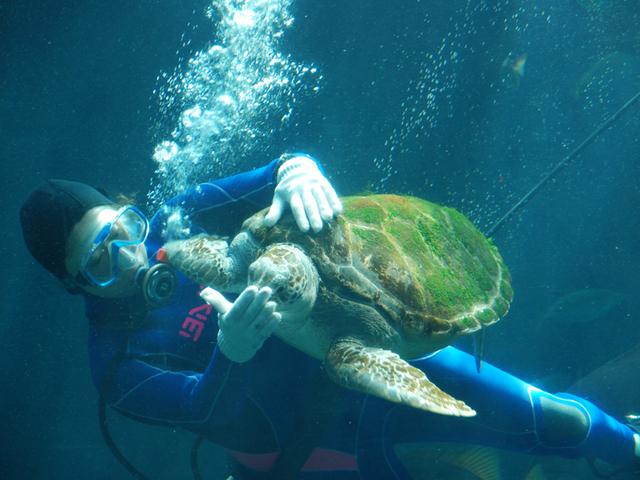 [イルカやアシカのショープログラムが満載【下田海中水族館】チケット付きプラン] 下田海中水族館