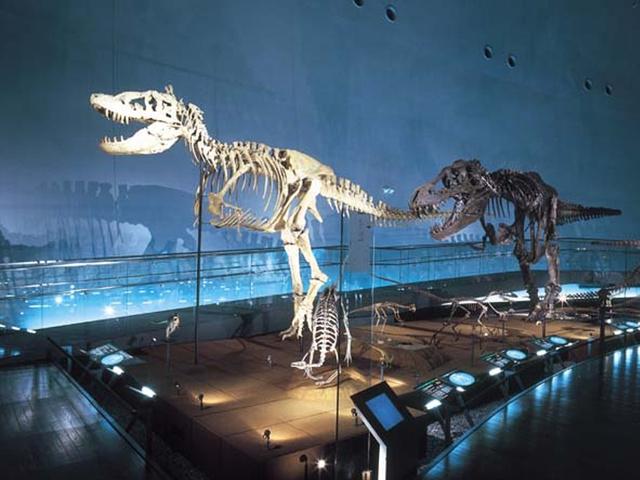 [おひとり様参加の方はバス席2シート利用THEシンプル!白山平泉寺と恐竜博物館] 福井県立恐竜博物館